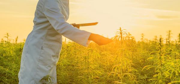 USDA Raises THC Limit for Hemp…