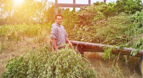 Over 40% of Arizona's Latest Hemp Crop…