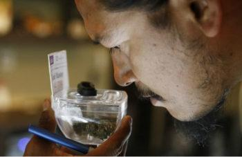 photo image 1st Year of Nevada Marijuana Sales Smokes Expectations