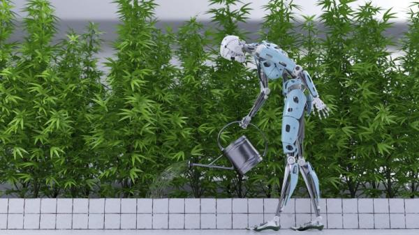 How AI and Robotics are Disrupting Trends in the Cannabis Industry