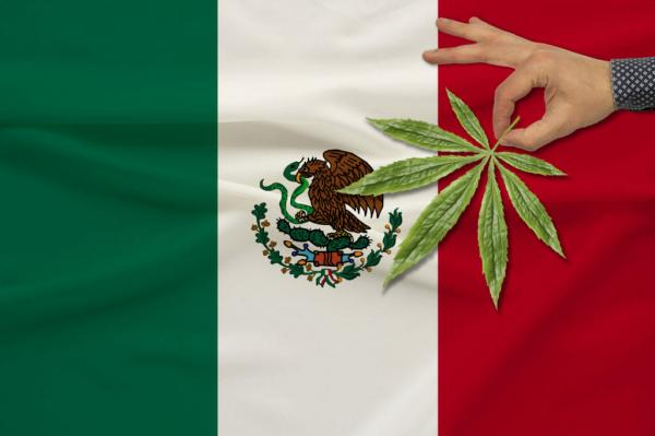 Mexican Cannabis: Legalization is…