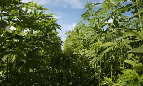 Pennsylvania K-12 Students Will Learn About Hemp As A Sustainable Material, State Announces
