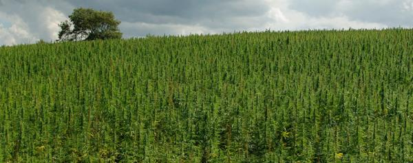 July Is National Hemp Month