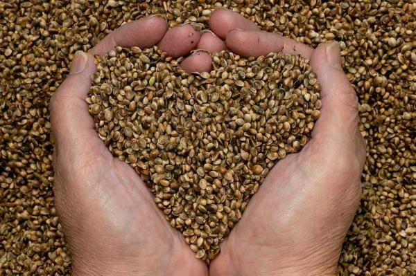 Hempseed nutrition is an American tradition