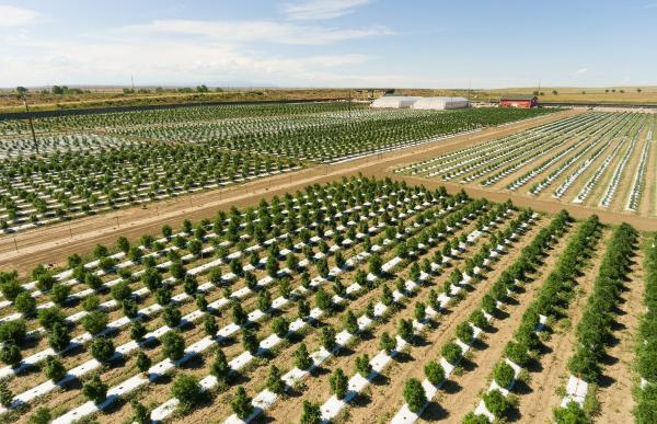 Colorado's largest cannabis grower…