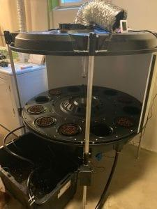 photo of How to Grow Cannabis at Home with an Automated System image