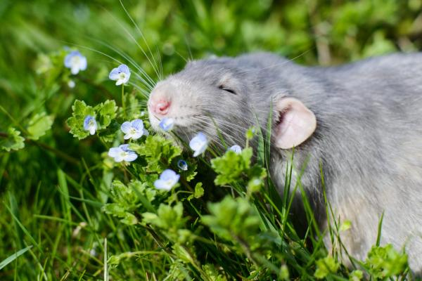 Terpenes imitate and enhance cannabinoid activity: study