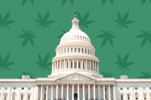 photo of What Does a Democrat Majority in The Senate Mean For Cannabis Legalization? image