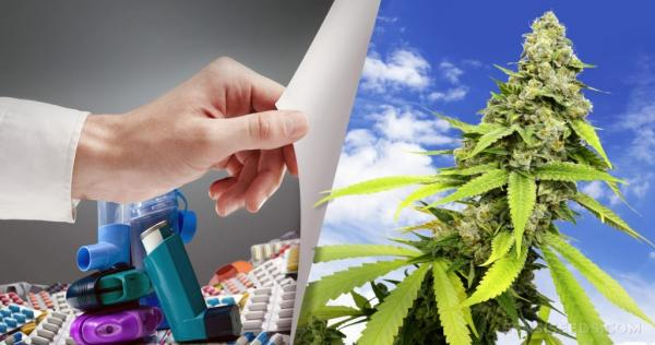 Israeli Researchers Conclude Cannabis…