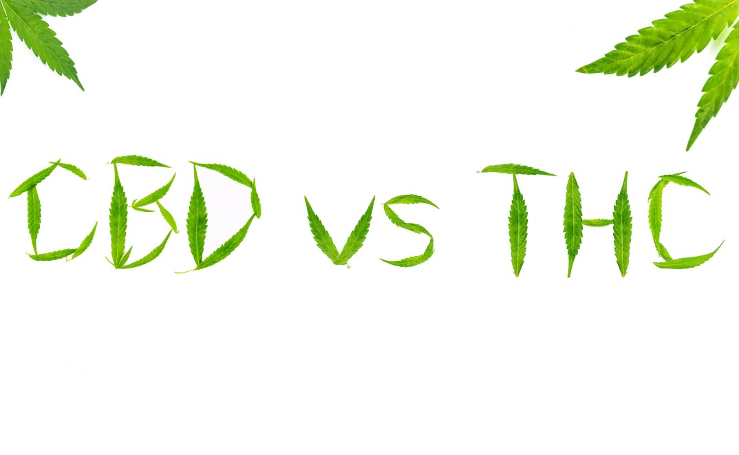 Learn the differences between CBD and THC: definition, properties and side effects