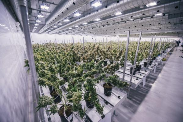 photo of Canopy Growth Changes Acreage Holdings Deal, CEO Murphy Is Out image
