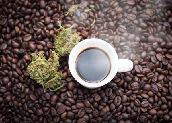 Cannabis and coffee: How do they affect…
