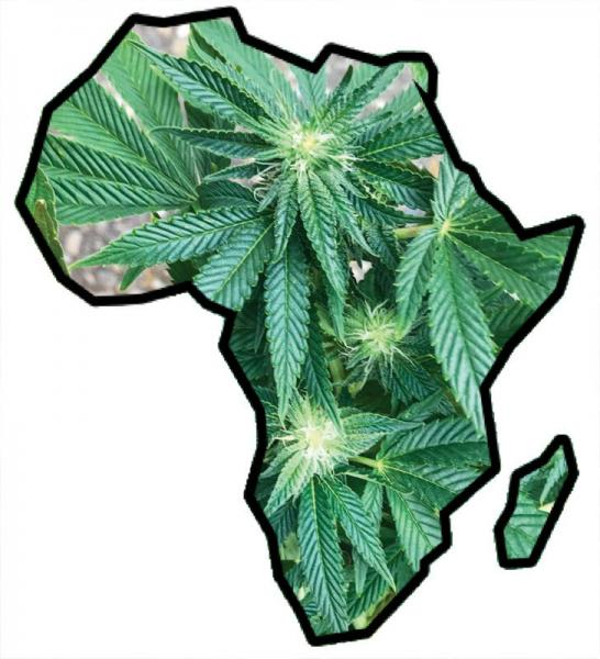 photo of African and American roots of cannabis culture image