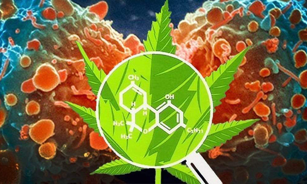 photo of Harvard Study Reveals Cannabis Compound's Potential in Cancer Therapy image