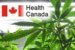 Health Canada Releases New Data On Cannabis Use In Canada