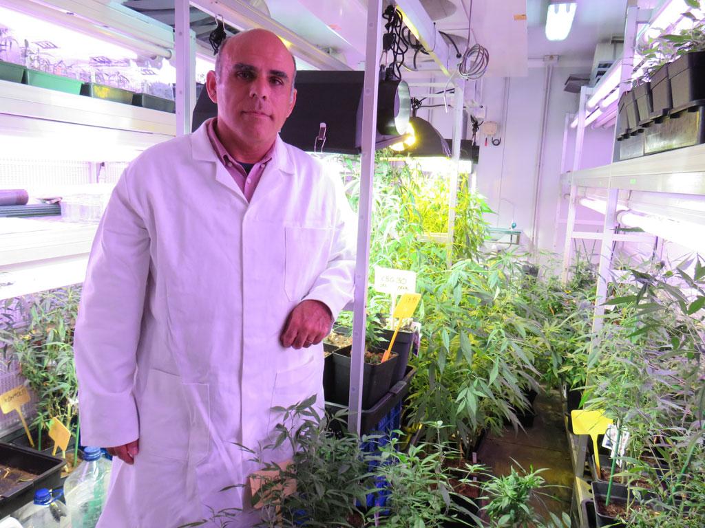 new cannabis strain high cbg