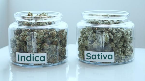Indica and Sativa: Outdated Terminology
