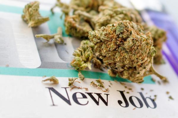 photo of 32% Cannabis Job Growth in 2020, Despite COVID-19 image