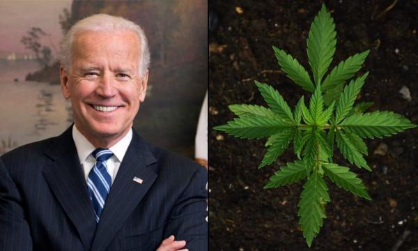 Biden Taps Marijuana Legalization Supporter To Lead Democratic National Committee