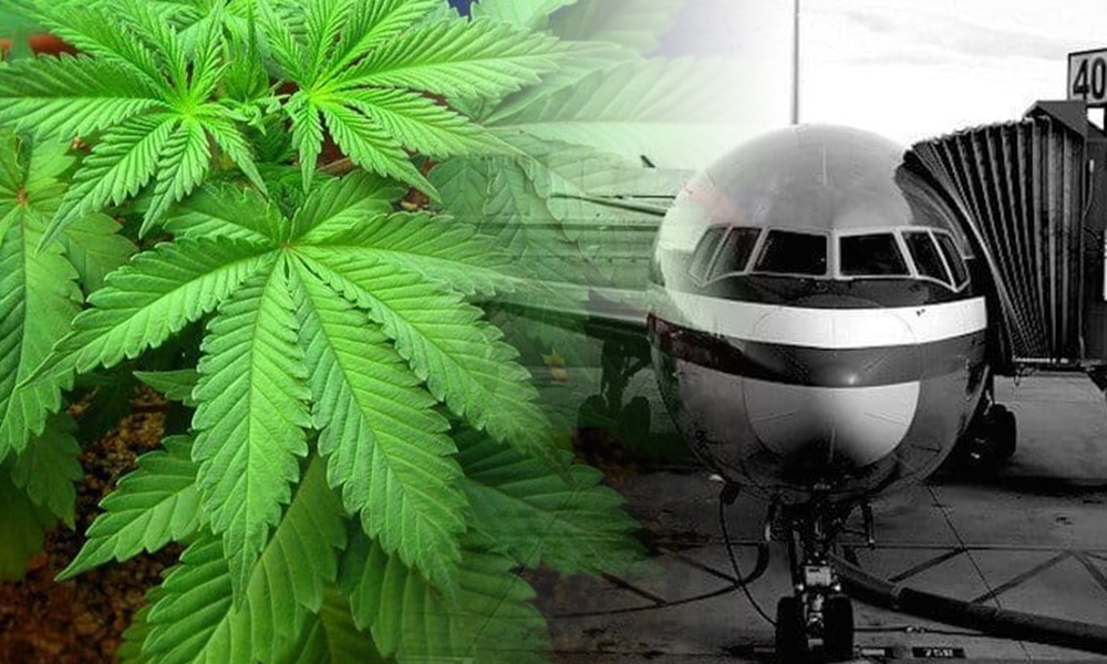 Marijuana Found Growing on DFW Airport…