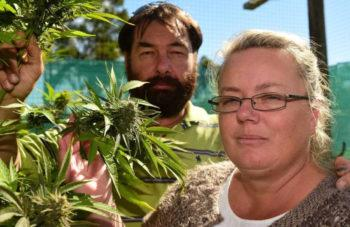 Medicinal Cannabis Can Be Sold In Australia Without Prescription, Says Therapeutic Good Administration