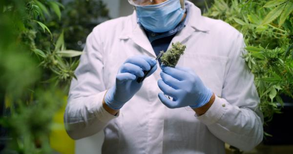 photo of Database Reveals U.S. Cannabis Research Focuses on Harms Rather Than Benefits image