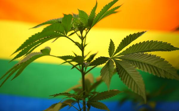 photo of 7 weed strains to celebrate Pride image
